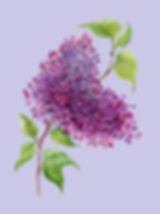 lilac illustration by Mirushova used in Is There Any Ice Cream?