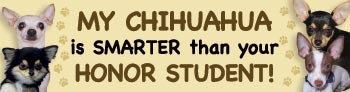 Chihuahua Honor Student (BU57)