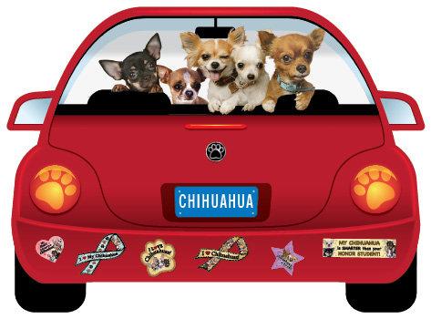 Chihuahua (CR8)