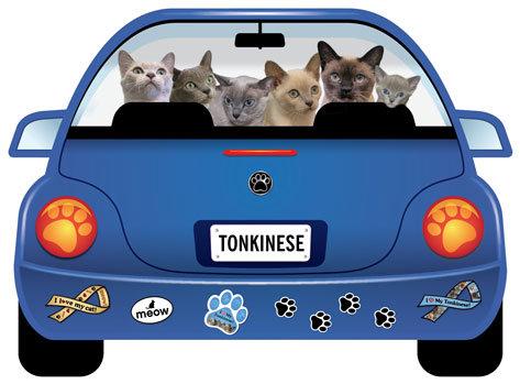Tonkinese (CR118)
