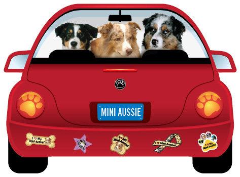 Mini Aussie (CR50)