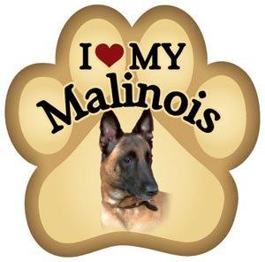 Belgian Malinois (PM70)