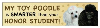 Toy Poodle Honor Student (BU88)