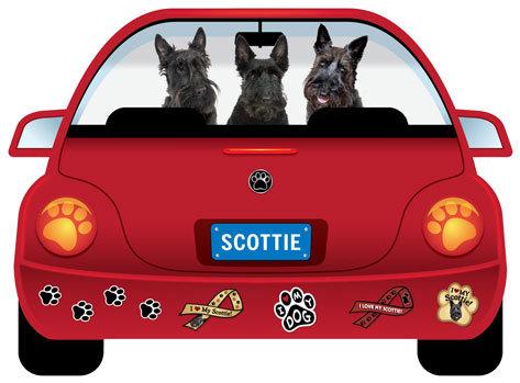 Scottie (CR126)