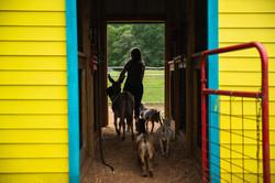 MT- Farm Animals-83