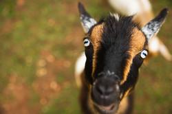 MT- Farm Animals-11