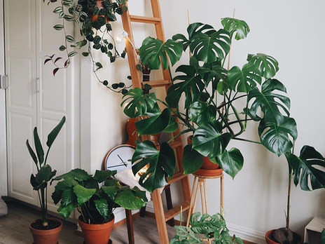 The Houseplant's Comeback Story