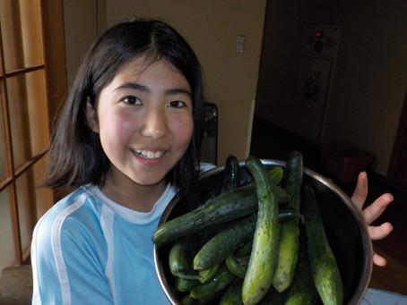 野菜!どんどん採れてます!