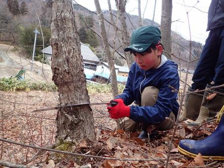 原木の伐り出し