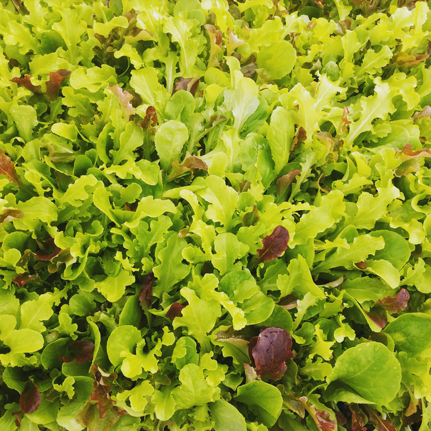 Baby Lettuce Mix