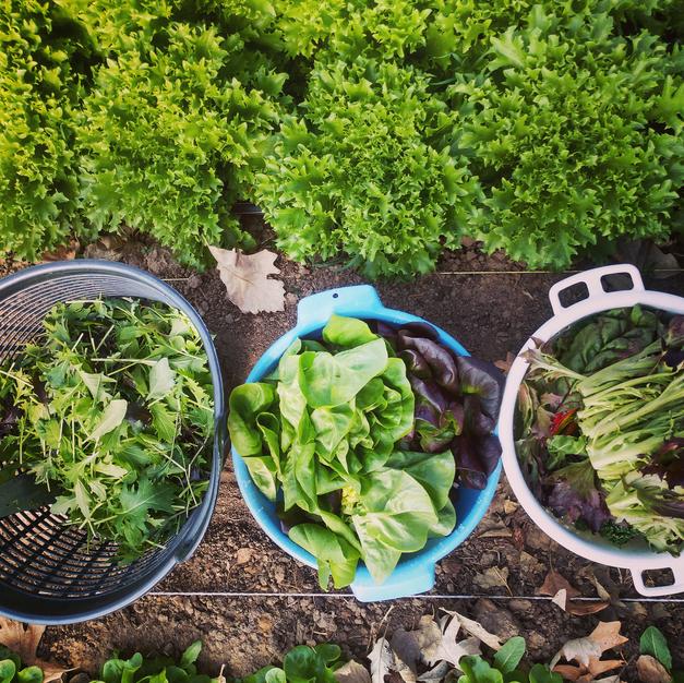 Harvest for Dinner!