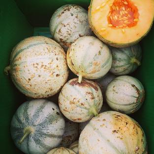 French Charentais Melon