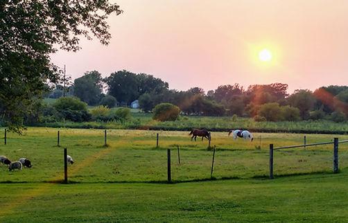 pasture pic1.jpg