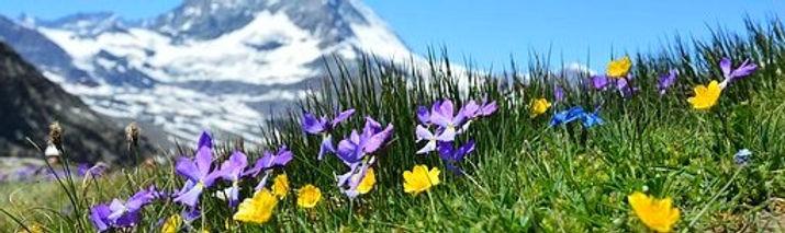 Alpine Mountain Flowers