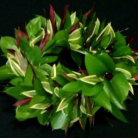 foliage haku ($55+)