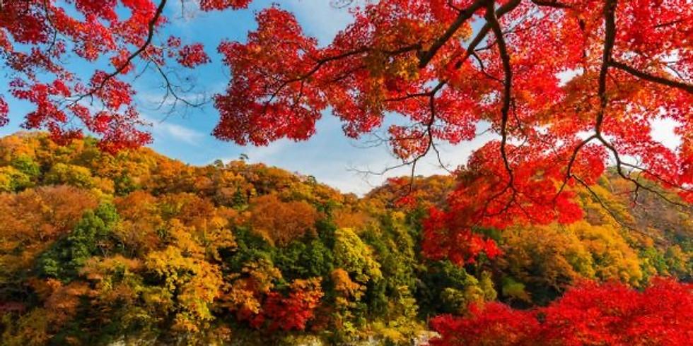 Seasons of Life: Autumn