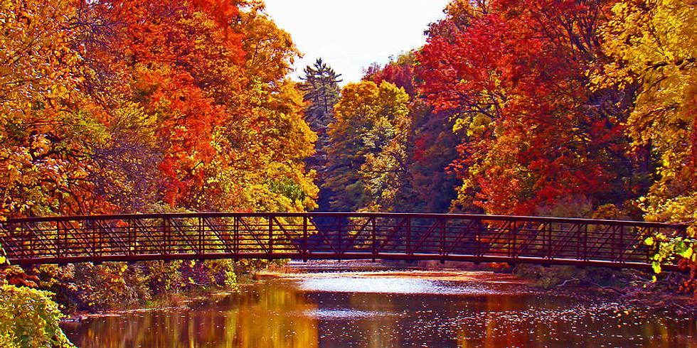Autumn Splendor & Wisdom ZOOM