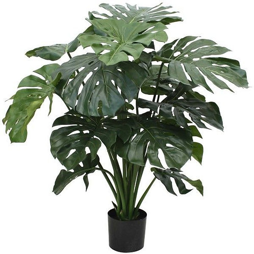 Large plant in pot
