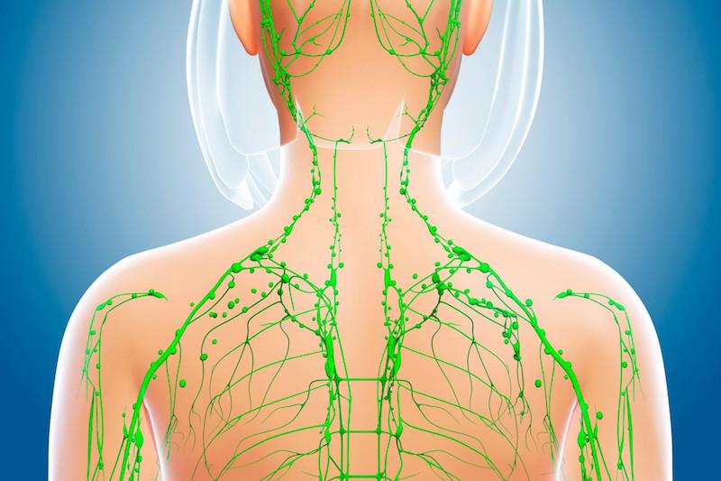 Female lymphatic system