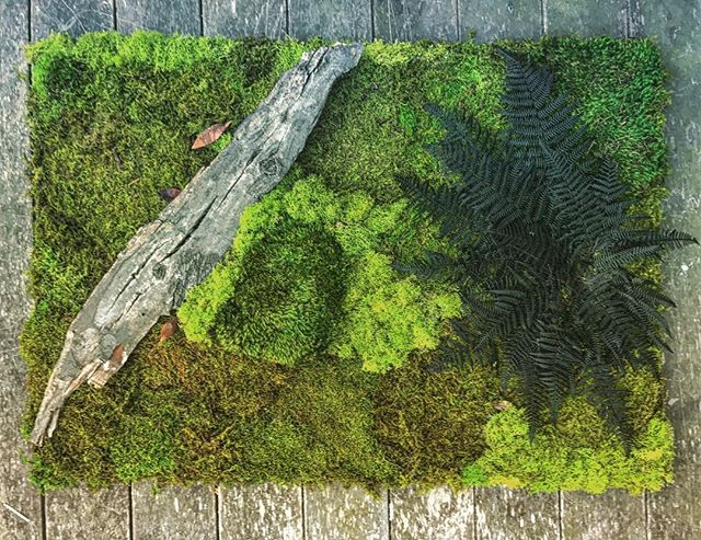 green design #statuswood #wallart #mossart #greendesign #customcreations #custommade #rusticart #mo