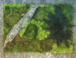 green design #statuswood #wallart #mossart #greendesign #customcreations #custommade #rusticart #mo