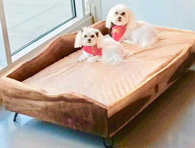 bring your fluffy best friend for a spa