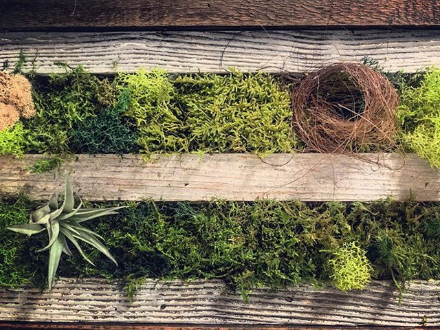 #statuswood #mossart #greendesign #wallart #moss #reclaimedwood #rusticart #rusticwood #custommade #