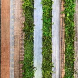 #statuswood #reclaimedwooddecor #reclaimedwood #rusticwood #mossart #mosscreations #wooddesign #rust