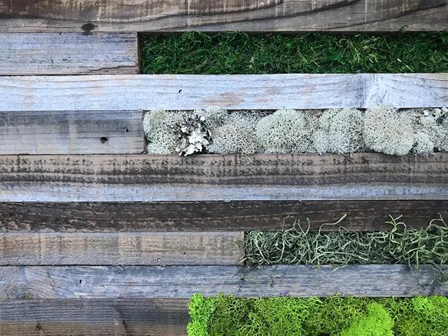 Reclaimed wood + moss art panel #statuswood #reclaimedwooddecor #mossart #rusticart #textures #coolr