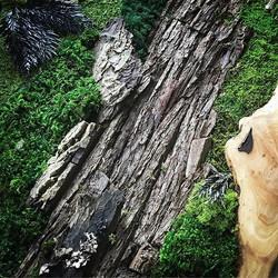 #statuswood #mossart #greendesign #greenart #natureart #playingwithnature #inspiredbynature #mo