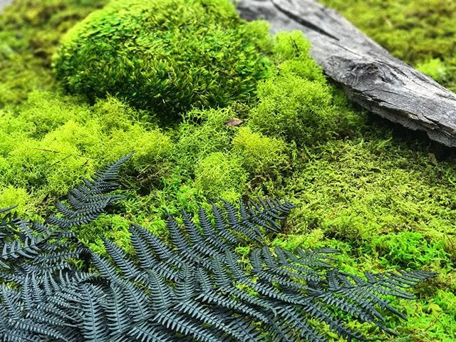 playing with nature #statuswood #moss #mossart #wallart #rusticart #greendesign #walldecor #customc