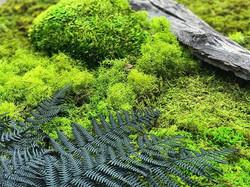 playing with nature #statuswood #moss #mossart #wallart #rusticart #greendesign #walldecor #customc