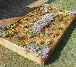 Raised Garden Beds.jpg