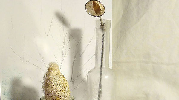 pupa mirror close .jpg