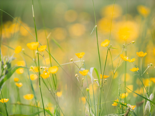 Spring - Poem