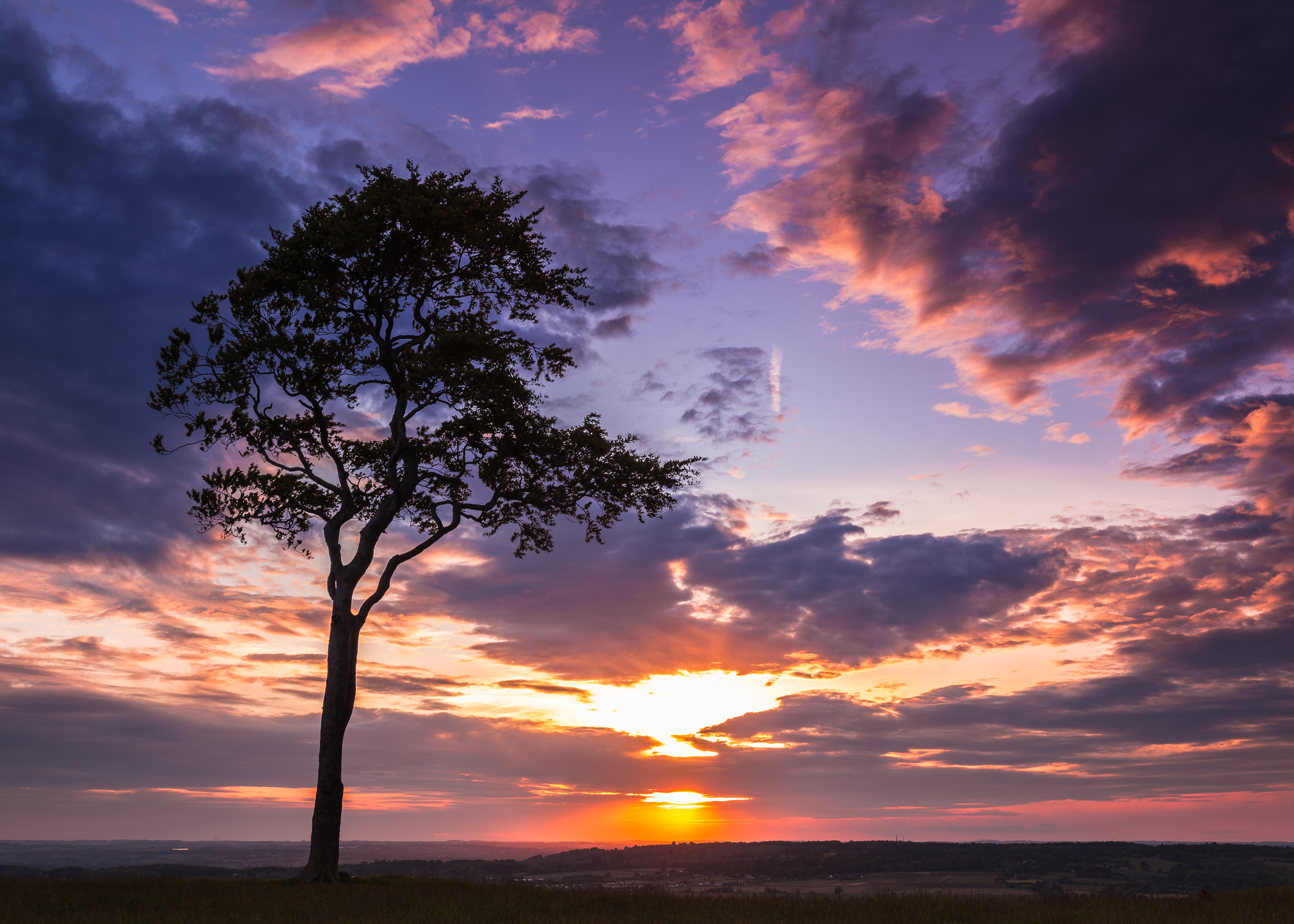 Roundway Hill - Lone Tree