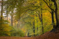 Speulderbos in Autumn