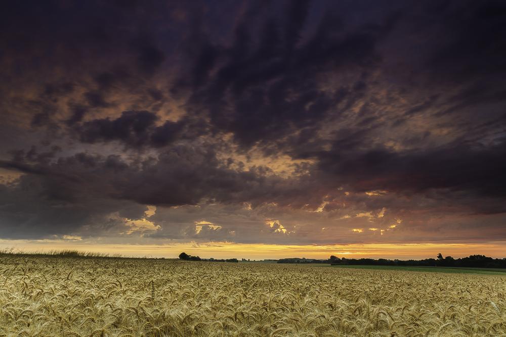 Wheat Fields at Sundown