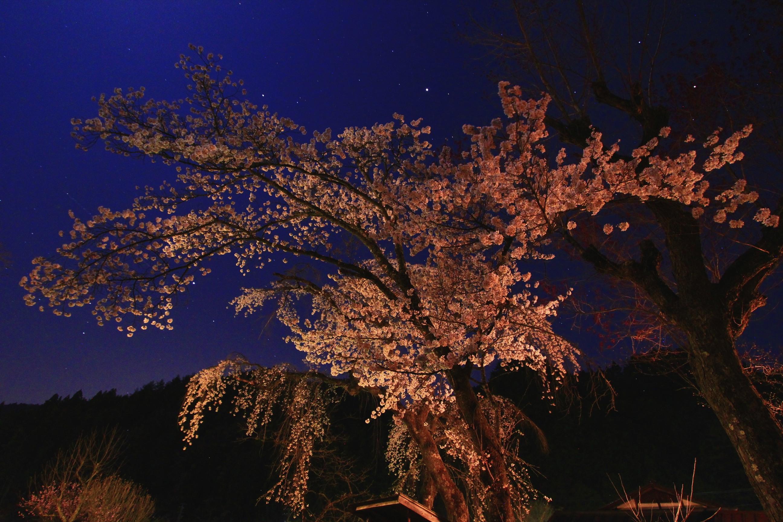 Night Blossom