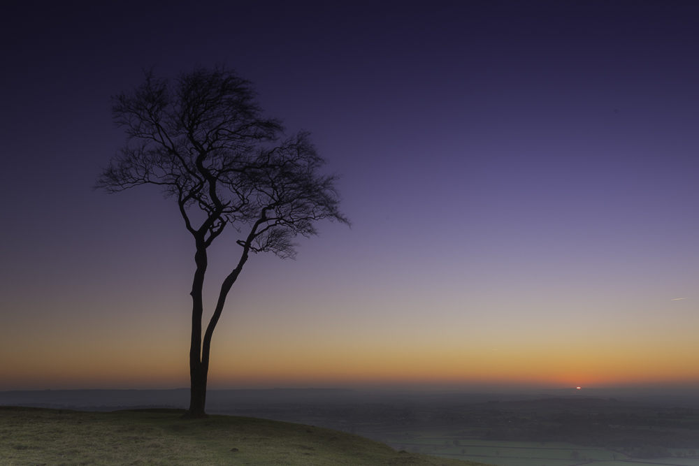Lonley Tree on Roundway Hill