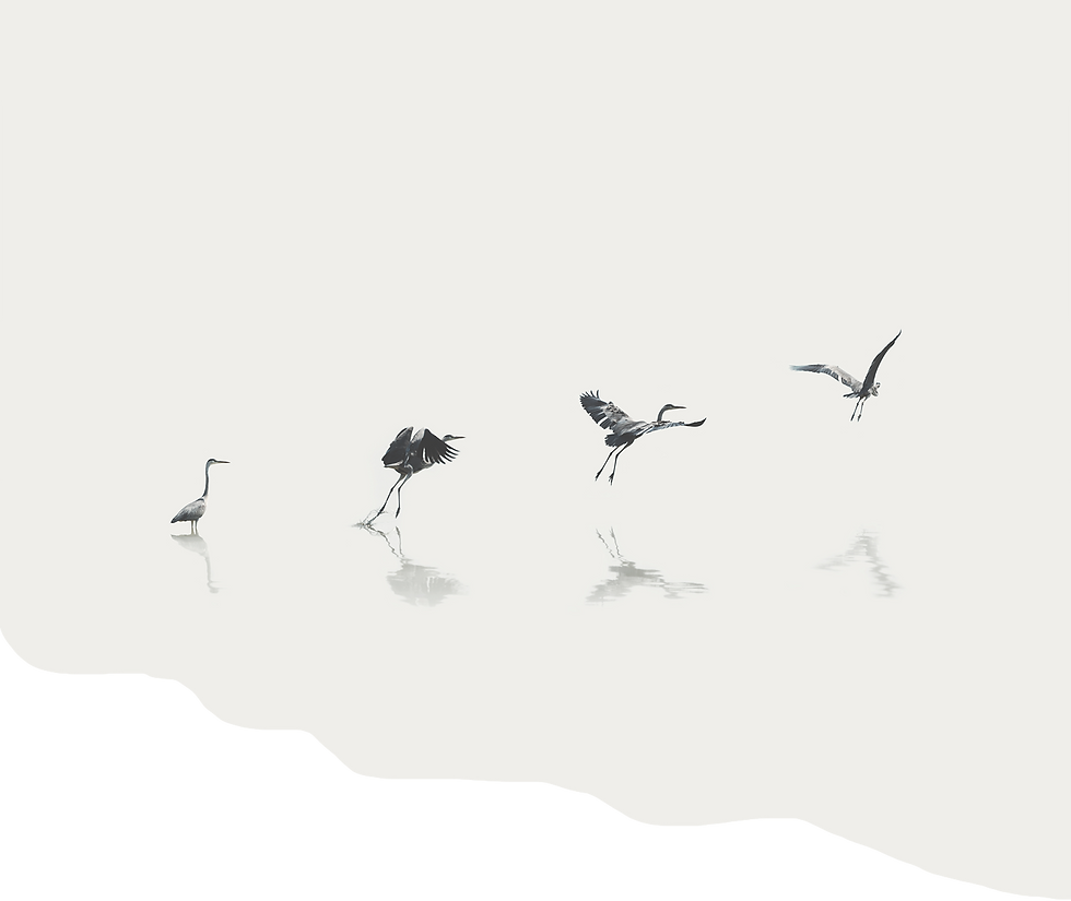 wimhof-greybirds-background.png