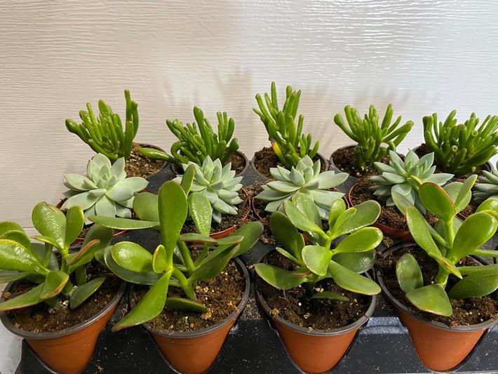 An array of succulents!