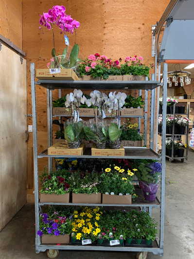 A full cart of potted plants!