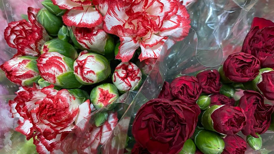 Lovely Carnations!