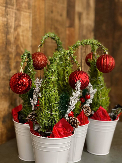Seasonal Potted Plants!