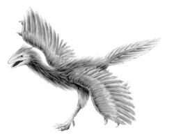 図鑑始祖鳥