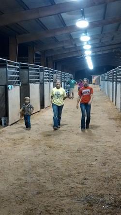 Strolling through the livestock