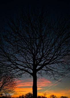 Tall Tree on Green Lane - Ashington