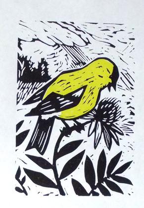 Goldfinch_1