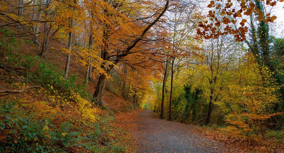 Autumn In Enniskerry